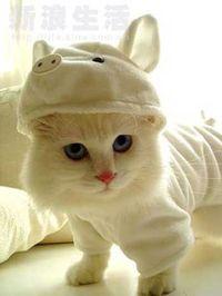 Cat-as-pig
